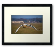 Vision of flight Framed Print