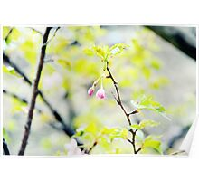 Pink Buds Poster