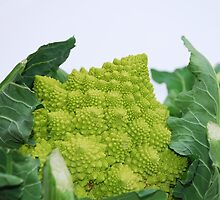 Romanesco Cauliflower by jojobob