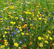 Wild flowers at the Olympic park, London  by Karentreefern
