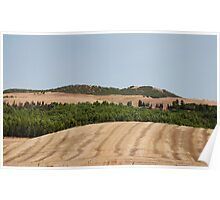 Brown Field and Trees Poster