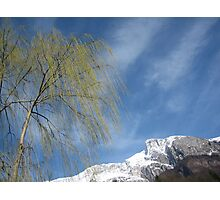 Bare Tree and Snowy Mountain Photographic Print