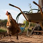 Morning chook by Maree Cardinale