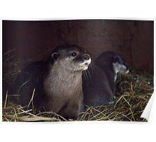 Otter holt Poster