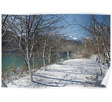 Lakeside Trees in Snow Poster