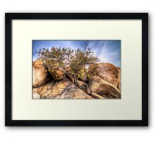 Life Finds A Way Framed Print
