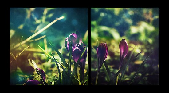 Spring Magic (Diptych) by Sybille Sterk