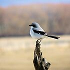 Loggerhead Shrike by Betty E Duncan © Blue Mountain Blessings Photography