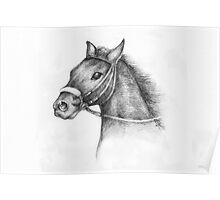 Pencil Drawing of a horse Poster