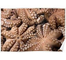Fresh Octopuses  Poster