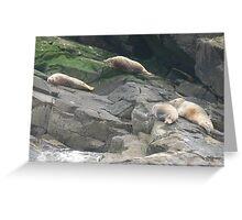 Seals Basking on Bass Rock Greeting Card