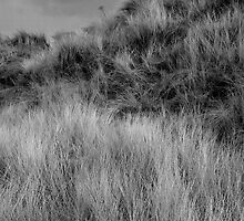 Solway sand dunes by keithfitton