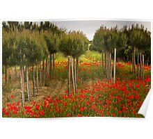 Poppy Fields in Tuscany Poster