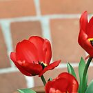 Red tulips with brick by Lynn Starner