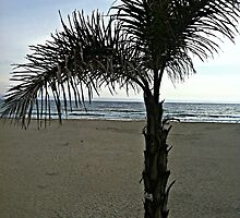Pismo Palm Tree by Maddy Nicole