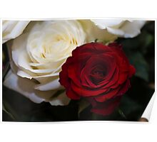Red & White Rose Poster