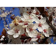 buncha blossoms Photographic Print