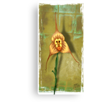 Monkey Face Orchid Canvas Print