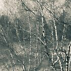 Toledo Ohio Botanical Gardens - Birch Trees by Mitch Labuda