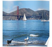 Happy Dogs in the Bay Water Poster