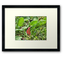 Dandy Insect Umbrellas!  Framed Print