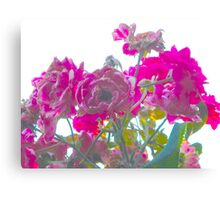 Pink evolution Canvas Print