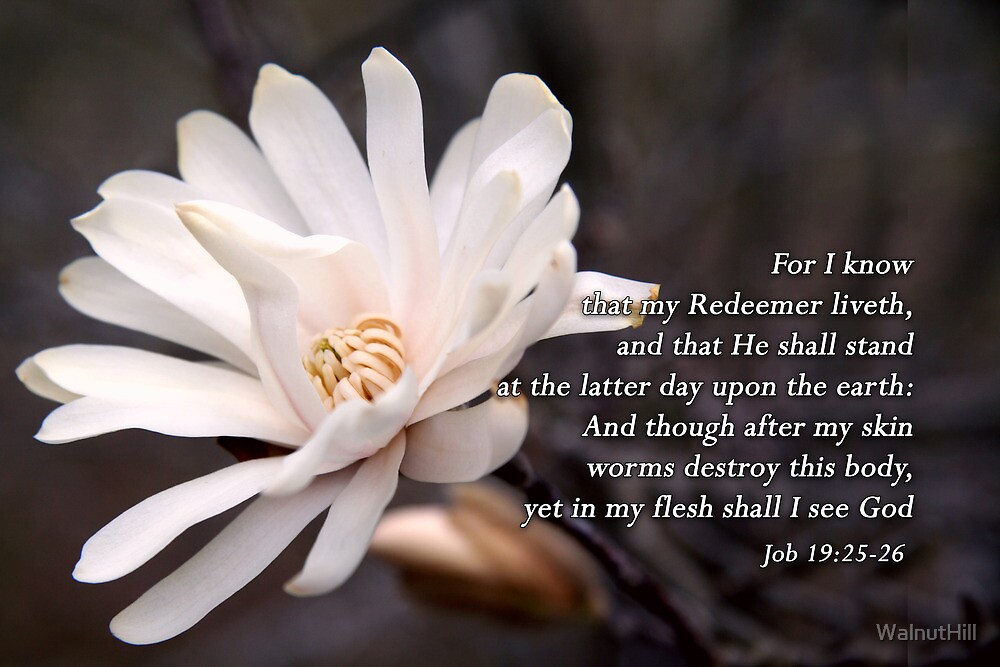 I know that my Redeemer liveth...   by WalnutHill