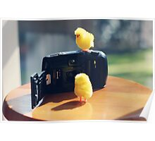 Toy Chickens - Camera Poster