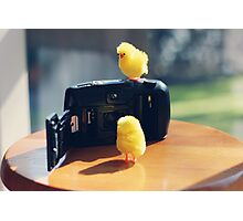 Toy Chickens - Camera Photographic Print