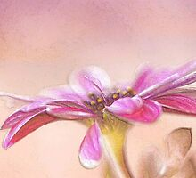 *Colored Pencil Daisy in Pink* by DeeZ (D L Honeycutt)