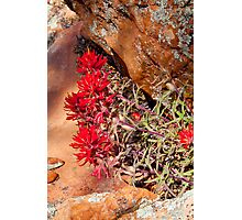 Red rock and red Indian Paintbrush wildflowers Photographic Print