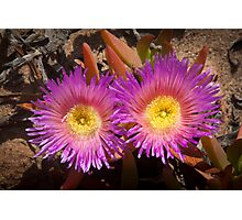 Rainbow colored cactus flowers - looking at you! Photographic Print
