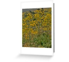 Paint Me Nature Greeting Card