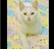 Pretty White Kitty by Luana Juknies