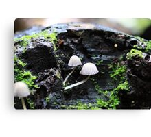 Mini world Canvas Print