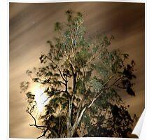Moonlit sky, windblown tree Poster
