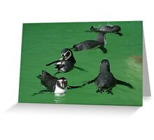 Playtime for the Penguins Greeting Card
