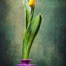 Grunge Yellow Tulip by Erik Brede
