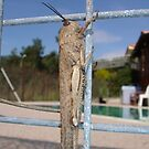 Locust On A Wire Fence by taiche