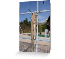 Locust On A Wire Fence Greeting Card