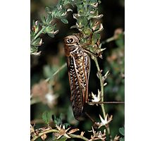 Locust Camourflaged With Garden Background Photographic Print