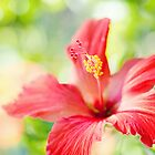 hibiscus love... by geisha