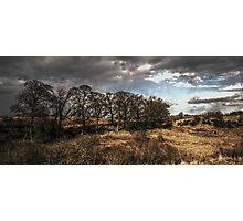 Copse Photographic Print