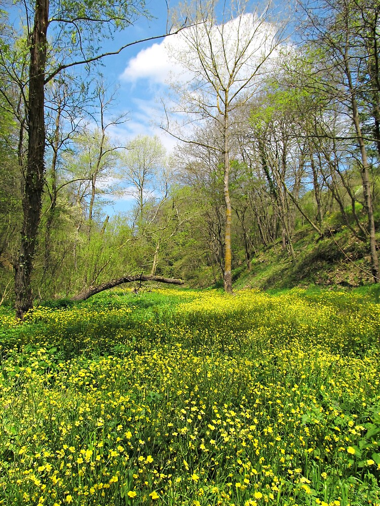 Forest with Wild Flowers by kirilart