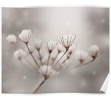 Snow seeds Poster