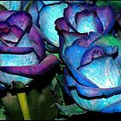 Blue Roses by EsthersDesigns