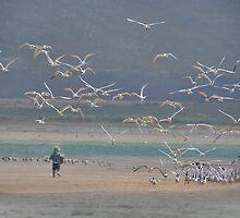Flamingo Lake Lagoon .. Western Cape, S.Africa by Johanna26