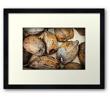 Shore thing I : coconuts Framed Print