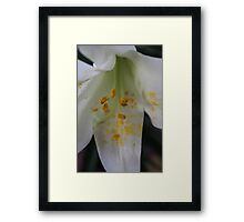 Easter Lily Macro.  Framed Print