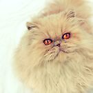 Who are you calling a big ball of fur?  by micklyn